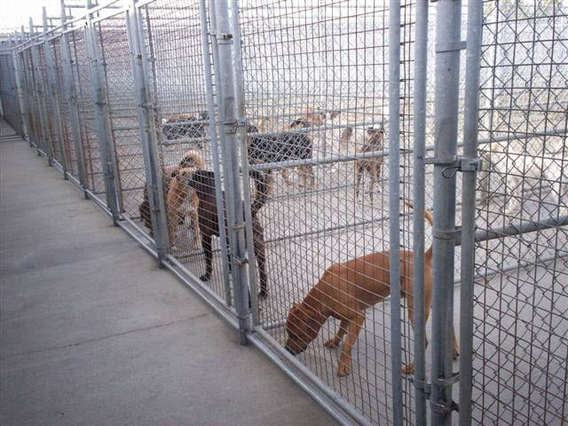 Dog & Cat Daycare Edmonton