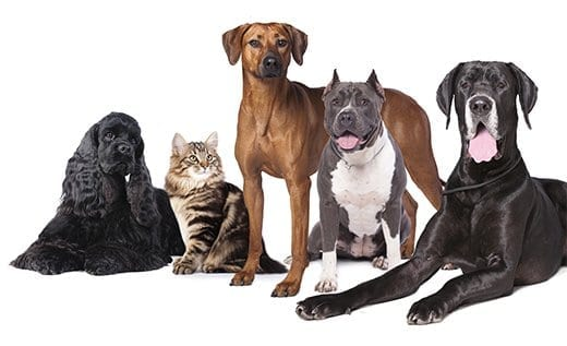 Dog & Cat Daycare Edmonton