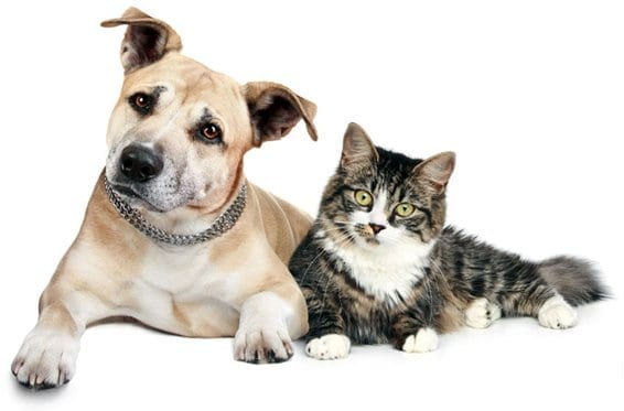 dog and cat sitting together white background