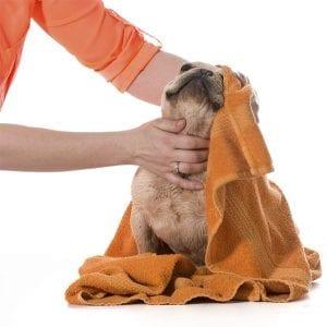 Dog Grooming Edmonton & Leduc | Club Mead Pet Resort