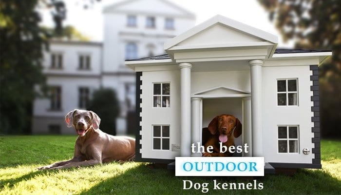 How to Choose the Right Outdoor Dog Kennel
