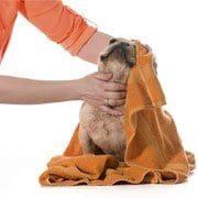Dog & Cat Grooming Edmonton   Club Mead Pet Resort