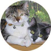 Cat Boarding & Kennels Edmonton | Club Mead Pet Resort