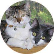 Cat Boarding & Kennels Edmonton   Club Mead Pet Resort